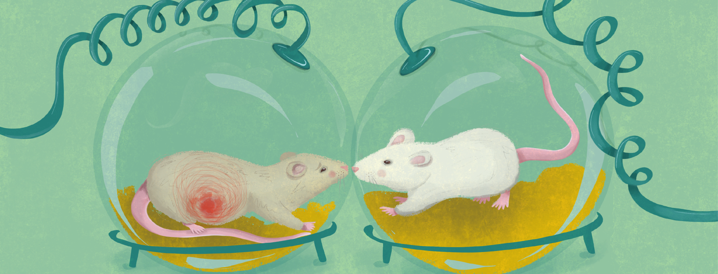 Two mice are in separate lab holding tanks - one is perfectly normal, the other is in pain and showing symptoms of endo pain.